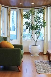 観葉植物 大1