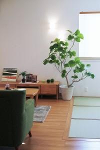 観葉植物 大2